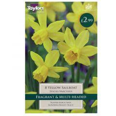 Narcissi Yellow Sailboat - Taylor's Bulbs
