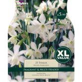 Narcissus Thalia XL Value