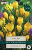 Crocus Yellow 12 Pack - Taylors Bulbs