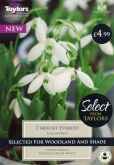 Galanthus Mount Everest 7-8 Selection - Taylor's Bulbs