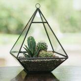 Glass Pyramid Terrarium - Crest