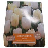 Beautiful Gardens Lemon Sorbet 15 Pack - Kapiteyn