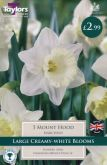 Narcissus Mount Hood 5 Pack - Taylors Bulbs