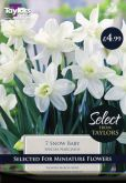 Narcissi Snow Baby 7 Pack - Taylors Bulbs
