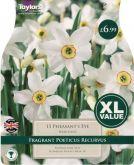 Narcissus Pheasants Eye 15 Pack - Taylors Bulbs
