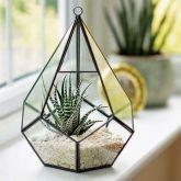 Plantpak Glass Teardrop Terrarium