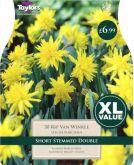 Narcissus Rip Van Winkle XL Value (30 Pack) - Taylors Bulbs