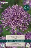 Allium Violet Beauty 5 Pack - Taylors Bulbs