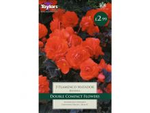 Begonia Flamenco Matador
