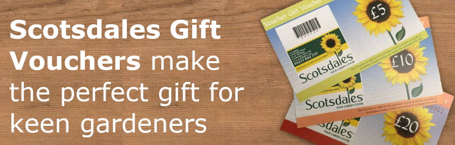 Scotsdales gift vouchers