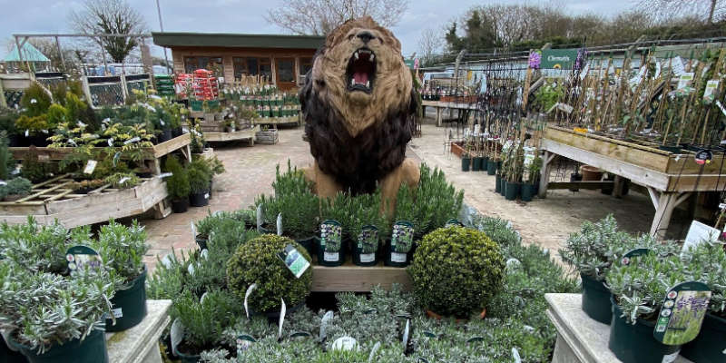 plants and lion