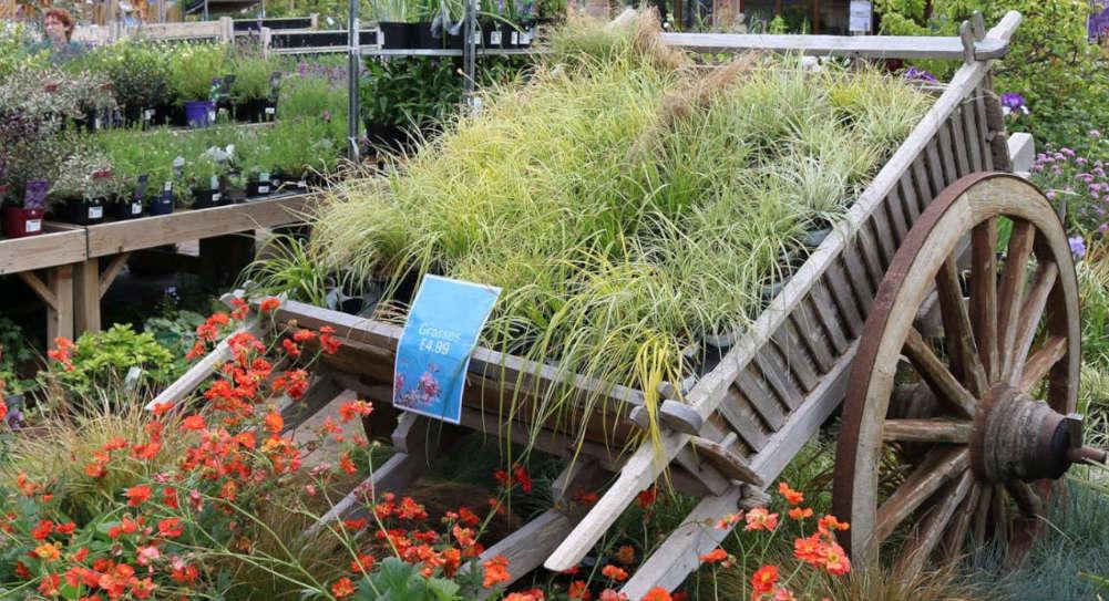 Horningsea plants