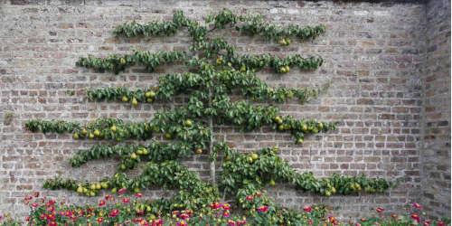 wall climbers