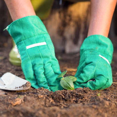Planting in Compost