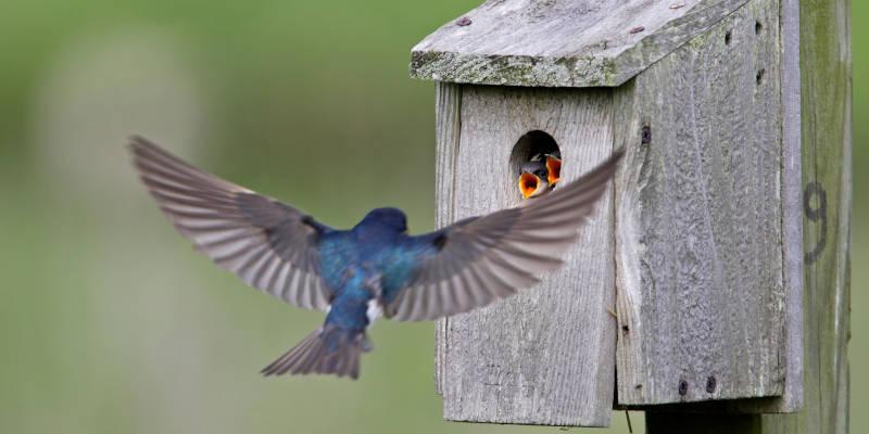 Wild Bird Box