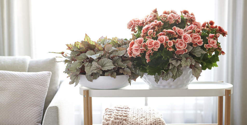 House plant of the month – April