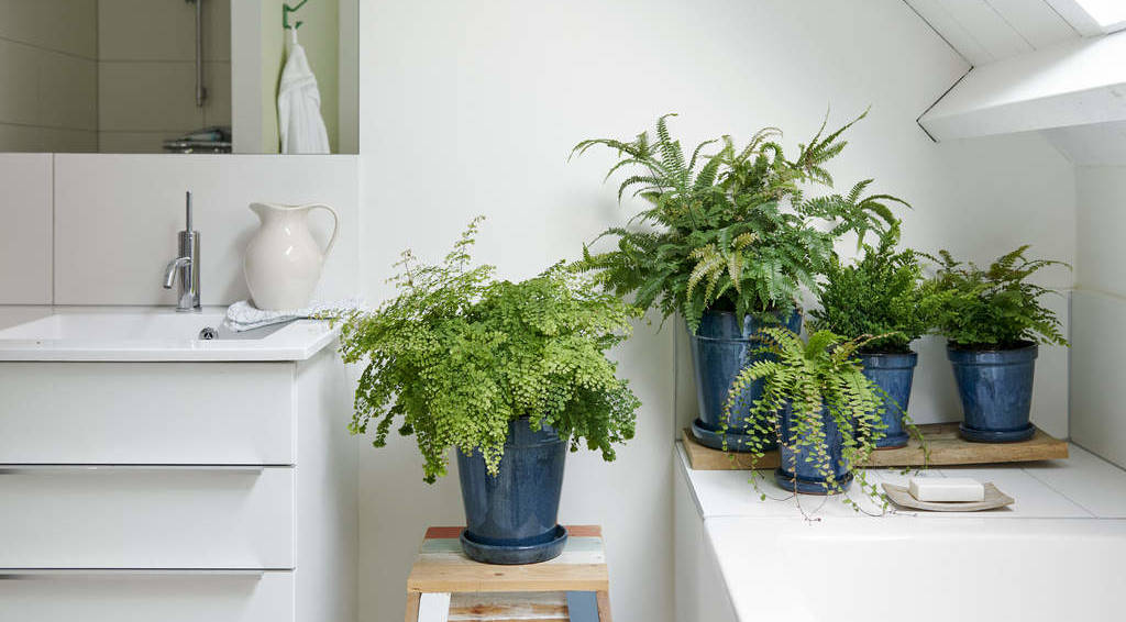 House Plant of the Month - May
